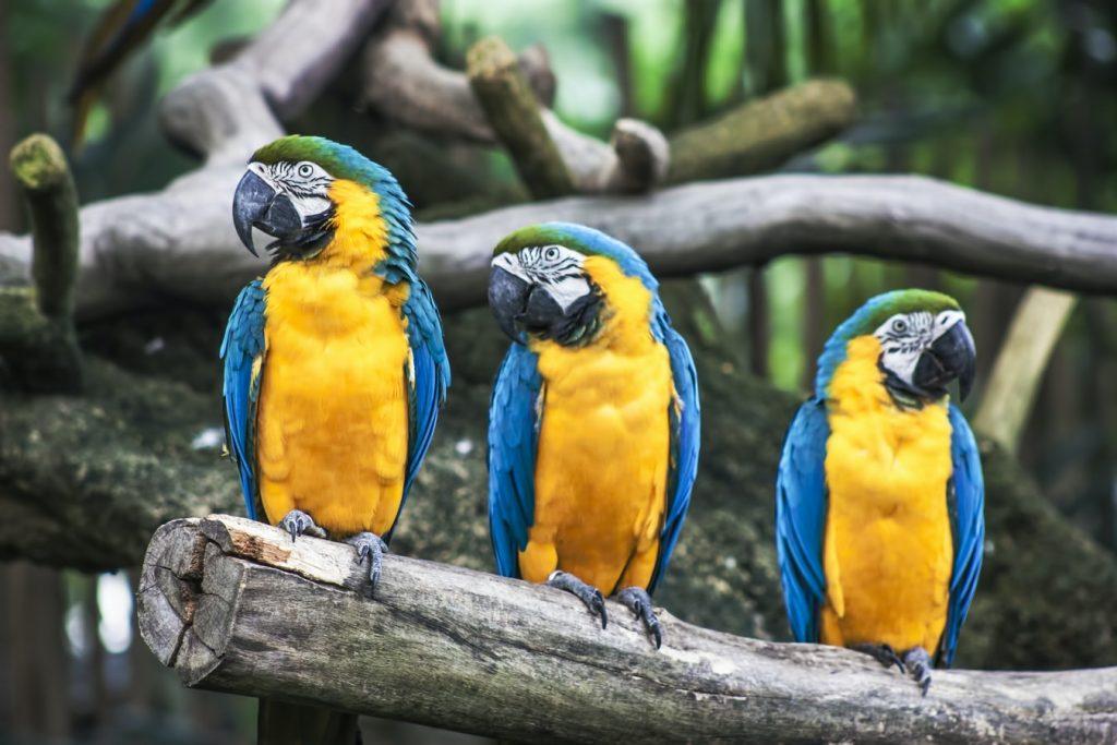 Wettbewerb: Was sagen die Papageien?